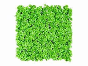 Künstliche Blattplatte Kleewiese - 50x50 cm