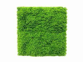 Künstliche hellgrüne Moosplatte Moswand - 50x50 cm
