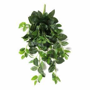 Künstliche Ranke Fitónia grün 80 cm