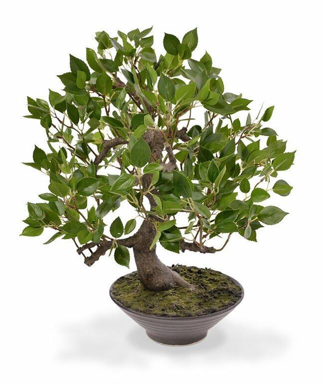Künstlicher Bonsai Fikus Wiandi 45 cm