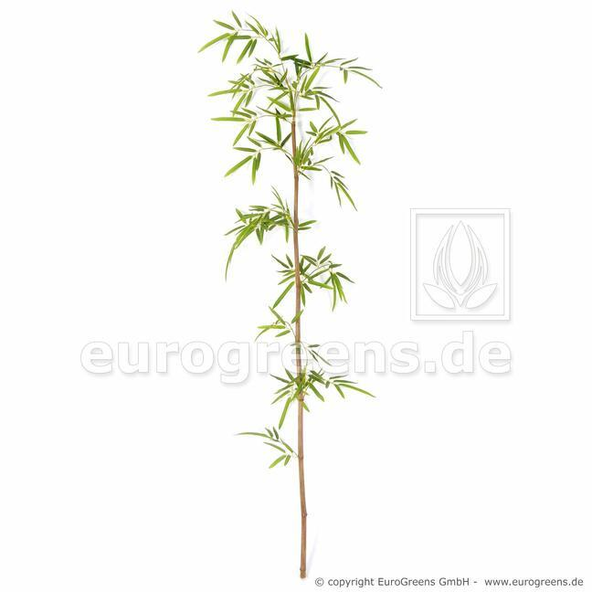 Künstlicher Zweig Japanischer Bambus 150 cm