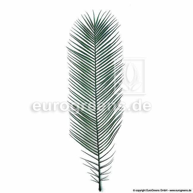 Künstliches Blatt Kanarienvogel Heuschrecke 100 cm