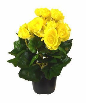 Kunstpflanze Begonie gelb 25 cm