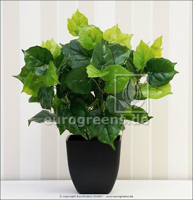 Kunstpflanze Cisus 40 cm