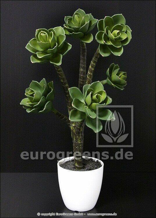 Kunstpflanze Eševéria 55 cm