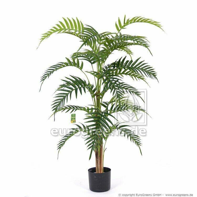 Palma Areca Royal vo veľkosti 120 centimetrov.